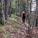 Schlängelpfad im Märchenwald