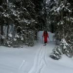 Skitour Selispitz Glaubenberg – Abfahrt zum Start